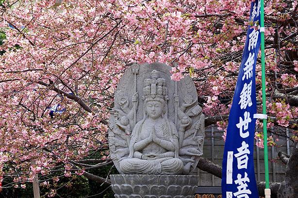 大慈寺のてんれい桜_b0186680_18344769.jpg