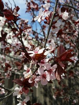 春_d0156997_293760.jpg