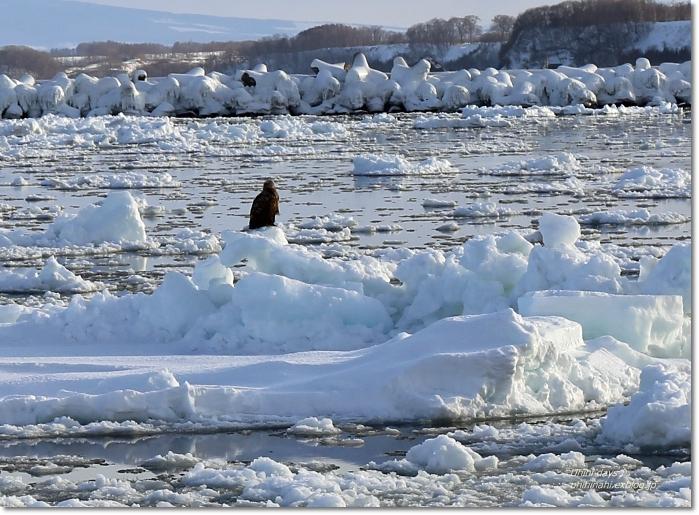 おーろら号で迫力の流氷! @網走_f0179404_17174272.jpg