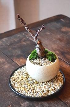 盆栽ワークショップのご報告_d0263815_17513042.jpg