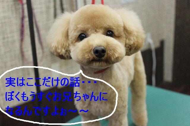 b0130018_22451422.jpg