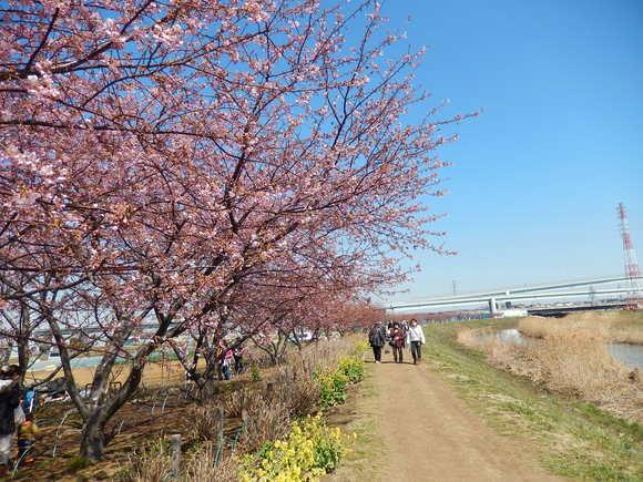 おらが街の..桜まつり_b0137932_1326889.jpg