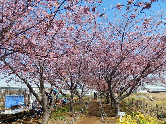 おらが街の..桜まつり_b0137932_135378.jpg