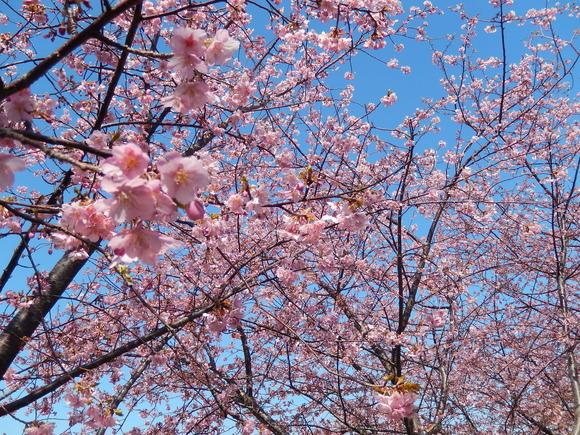 おらが街の..桜まつり_b0137932_1364124.jpg