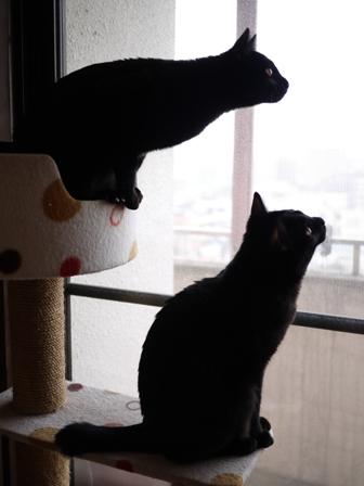 鳥さんがいる猫 ぎゃぉすてぃぁら編。_a0143140_23334257.jpg