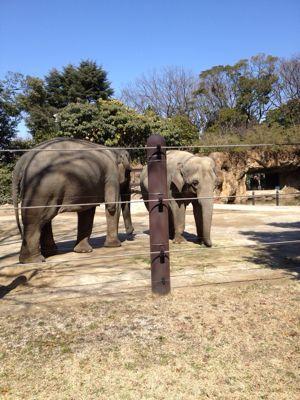 動物園_e0004846_8312822.jpg