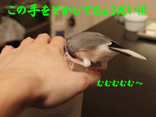 b0158061_20304695.jpg