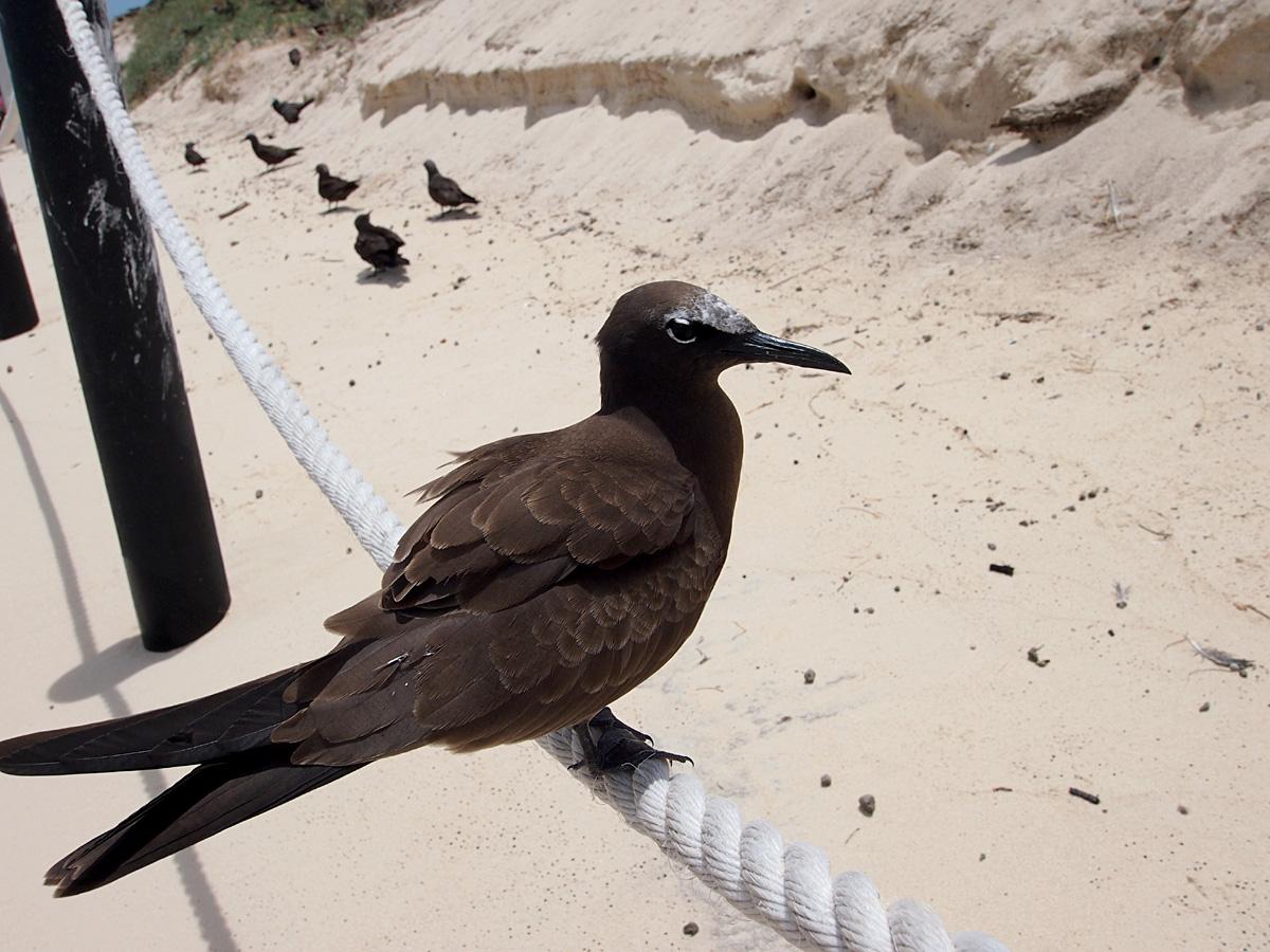 ミコマスケイで野鳥4_d0283373_54707.jpg