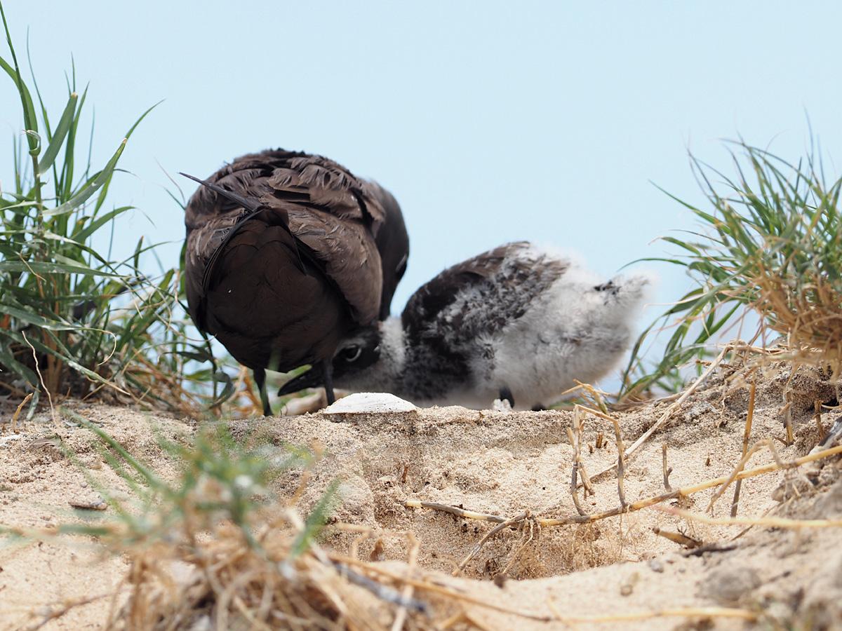 ミコマスケイで野鳥5_d0283373_92991.jpg