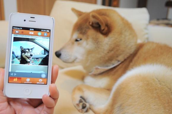 犬猫里親募集アプリ_a0126590_0484367.jpg