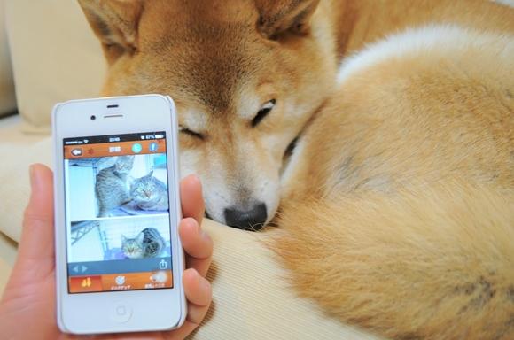 犬猫里親募集アプリ_a0126590_048545.jpg