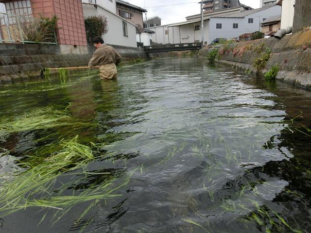 今年初めての「田宿川の川そうじ」_f0141310_8124694.jpg