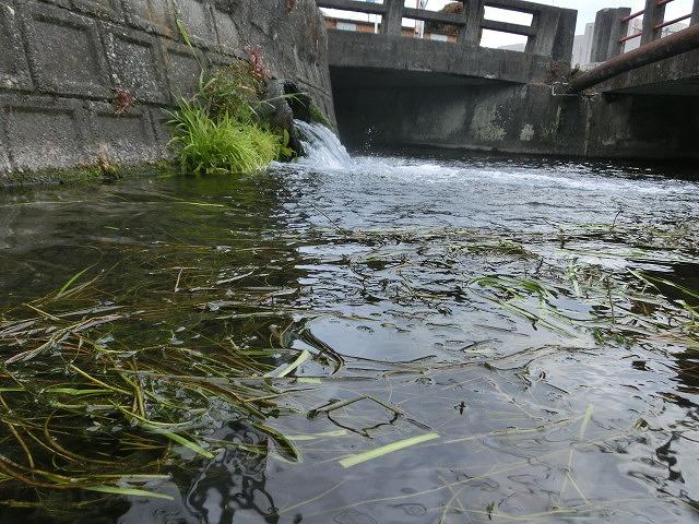 今年初めての「田宿川の川そうじ」_f0141310_8125910.jpg