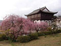 御津自然観察公園_b0155038_16341935.png