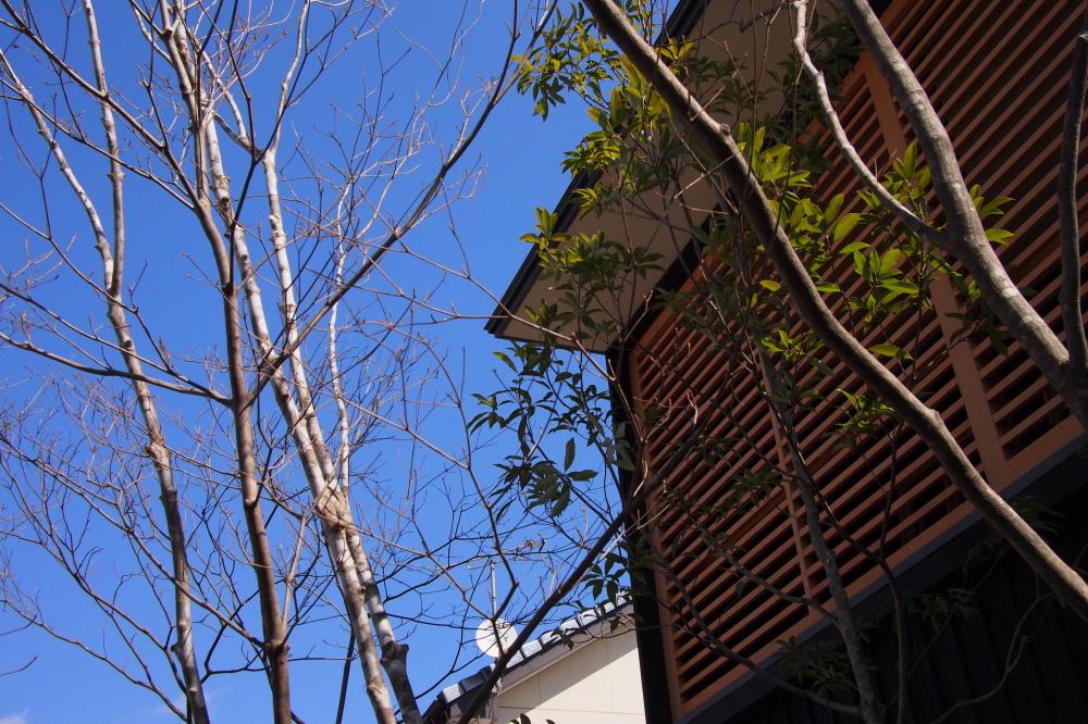 庭ありきの家、家ありきの庭_d0122640_16372394.jpg