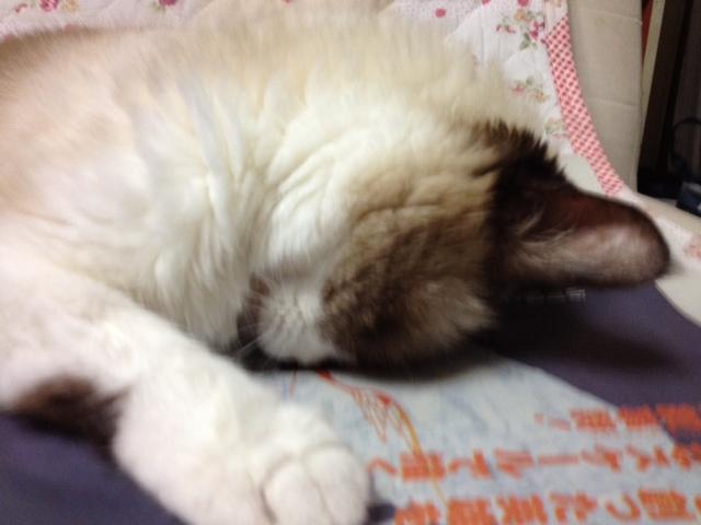 09/03/2014  癒し_a0136671_323369.jpg