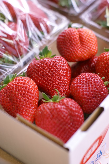 西岡さんのイチゴ 始まります!_a0176673_1930046.jpg