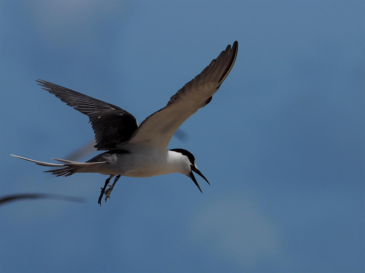 ミコマスケイで野鳥6_d0283373_15235656.jpg