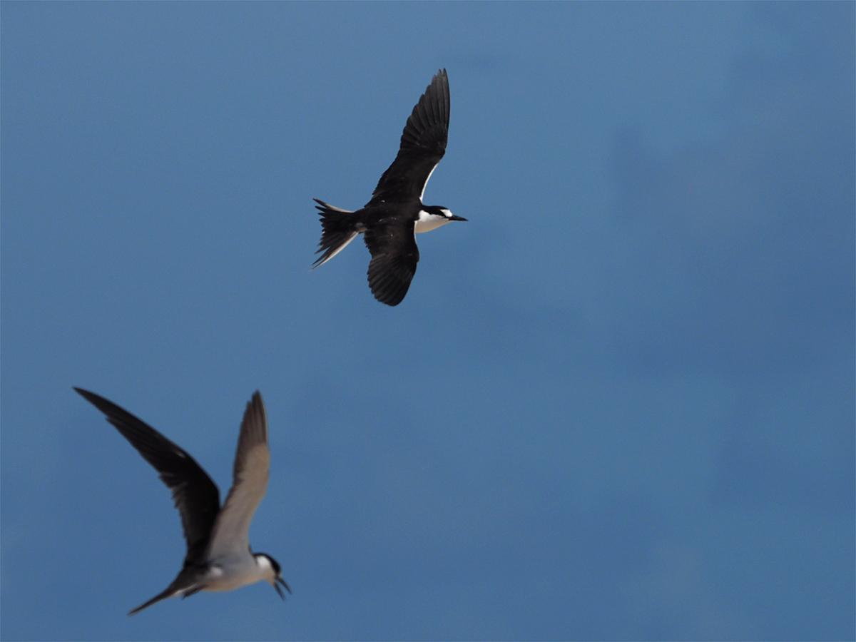 ミコマスケイで野鳥6_d0283373_15241578.jpg