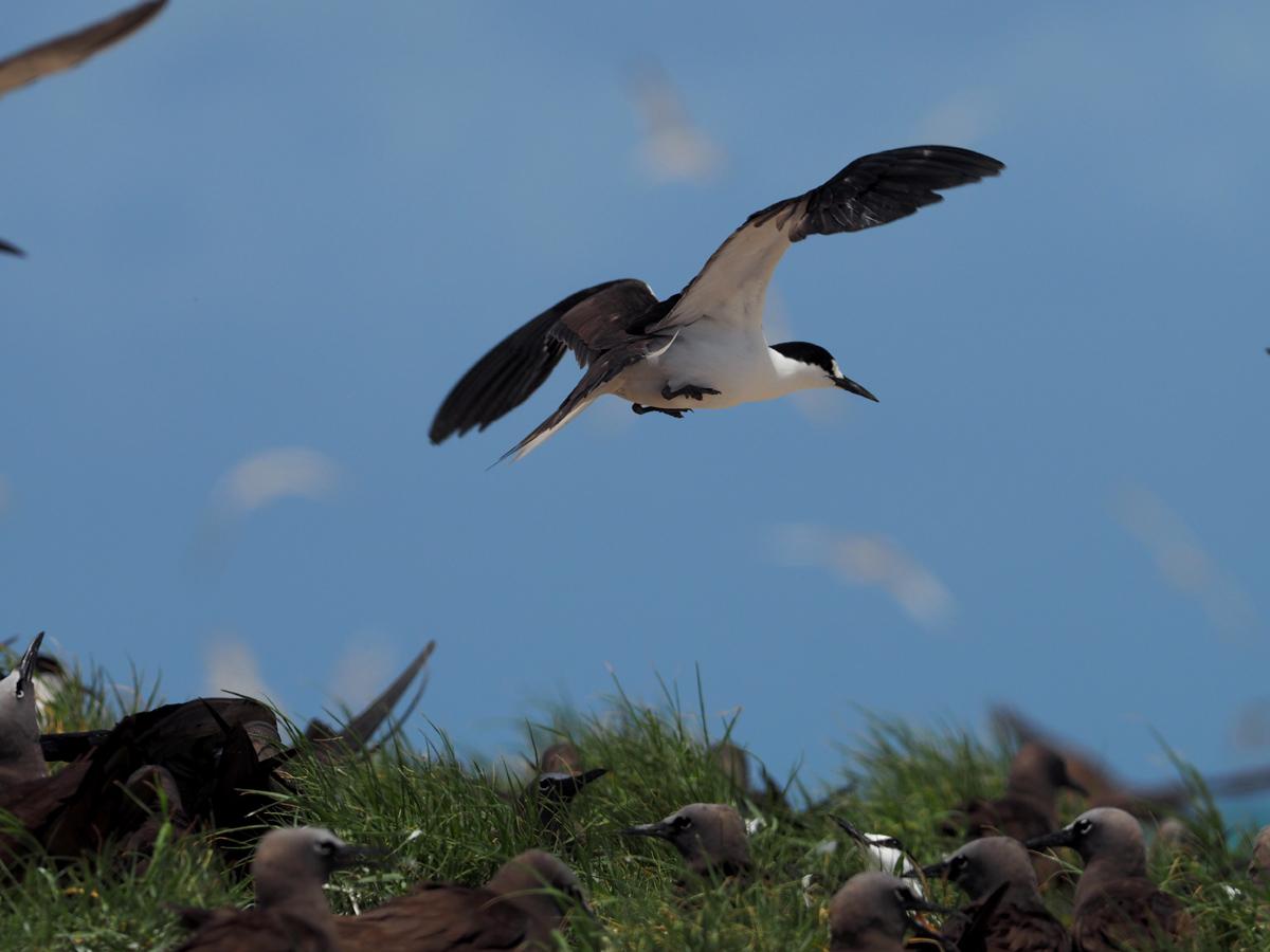 ミコマスケイで野鳥6_d0283373_1524516.jpg