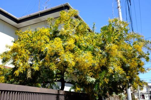 春を告げる花.._e0067283_2137329.jpg