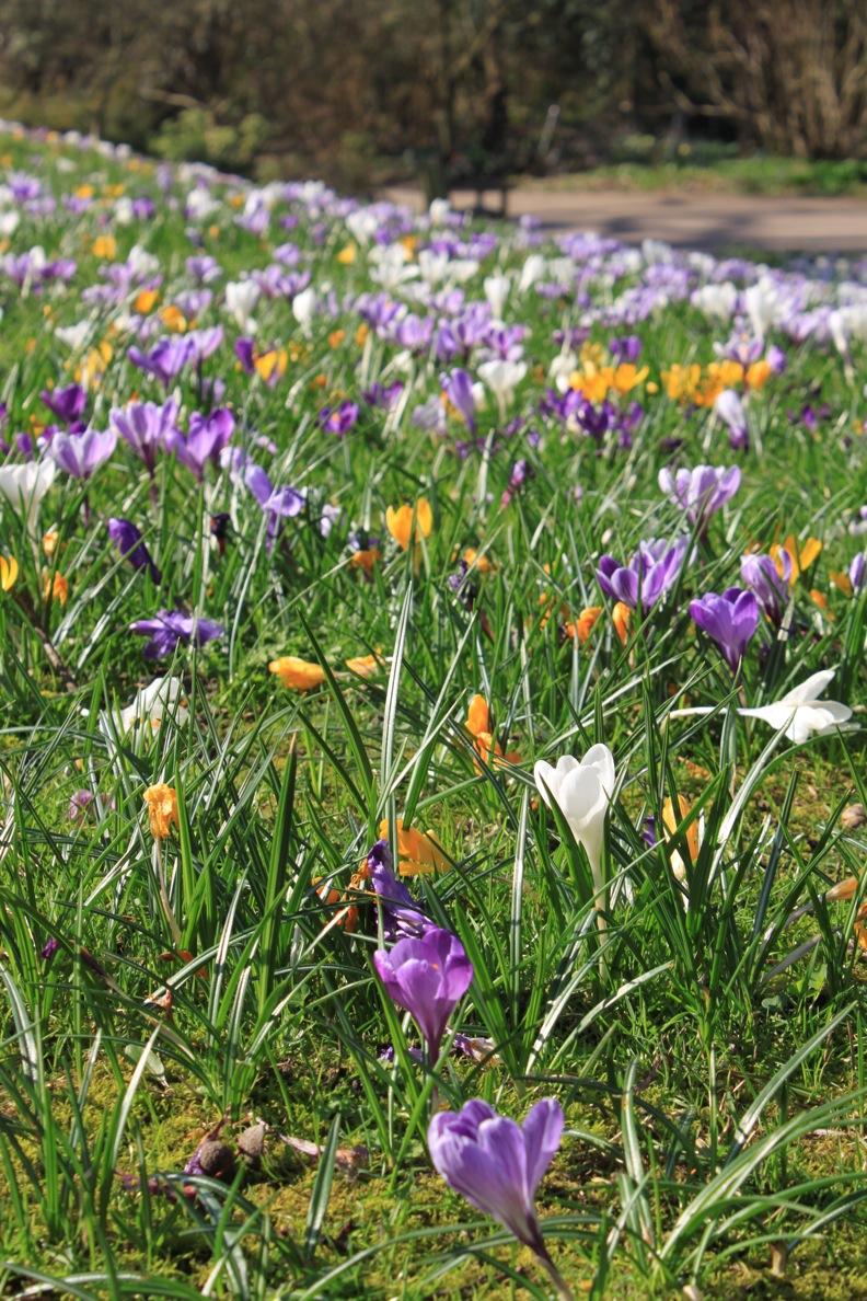 春だ〜。_a0137487_532245.jpg
