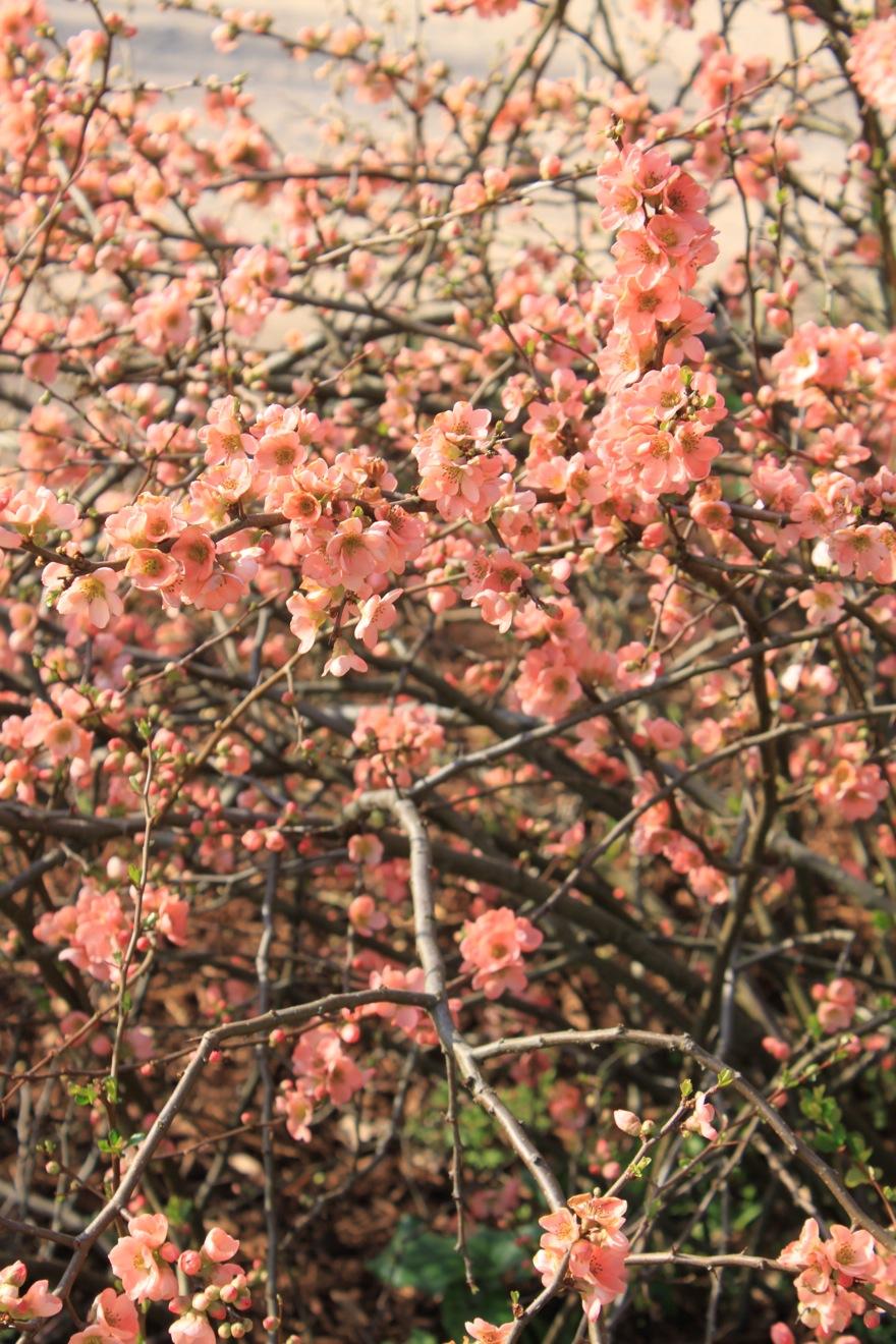 春だ〜。_a0137487_5332237.jpg