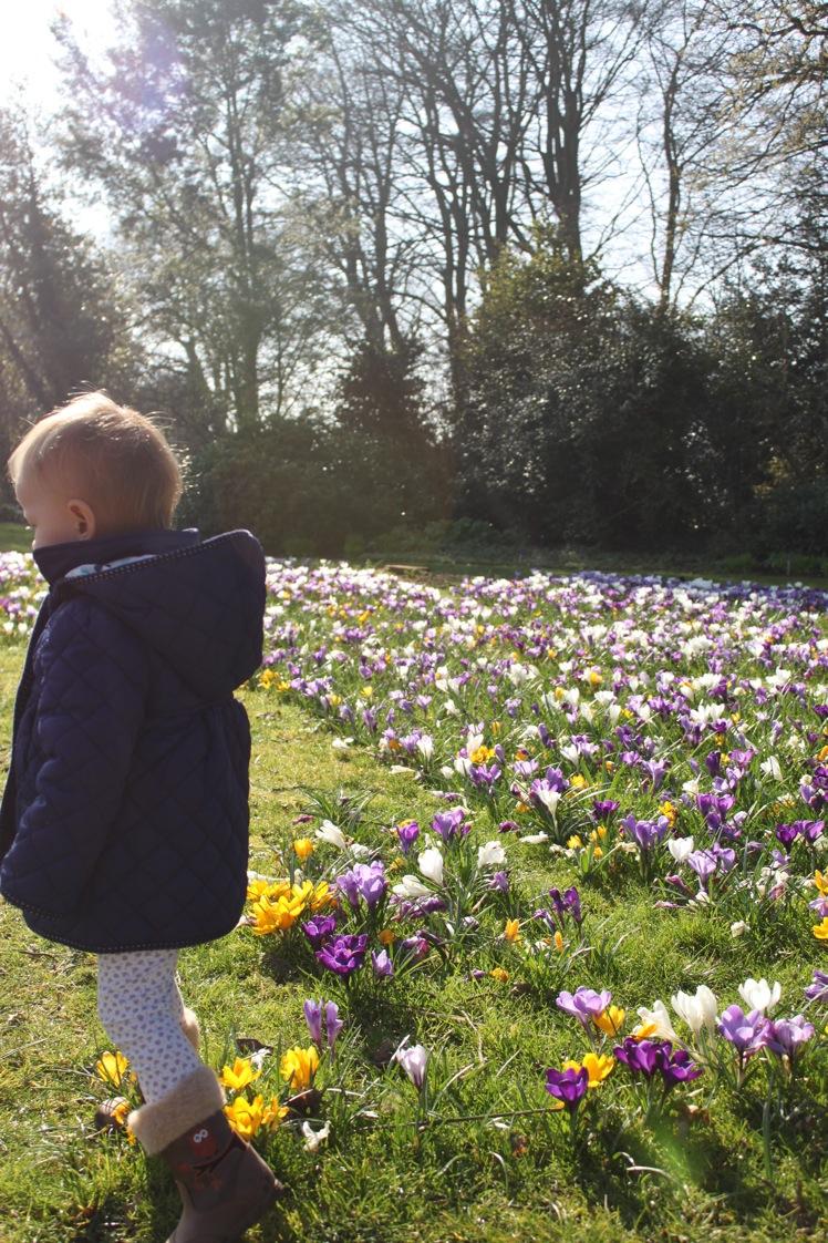 春だ〜。_a0137487_5344886.jpg