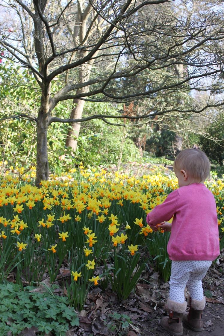 春だ〜。_a0137487_5352771.jpg