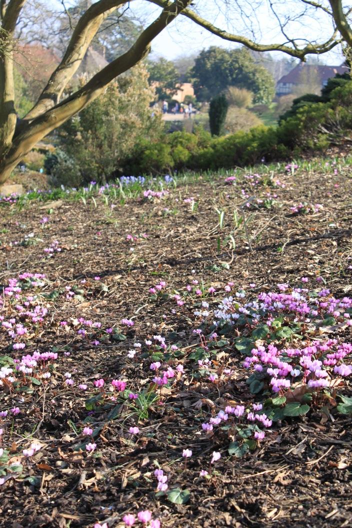 春だ〜。_a0137487_5365027.jpg