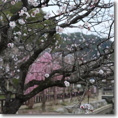 太宰府.大神社展.アクロス福岡_f0099102_20493963.jpg
