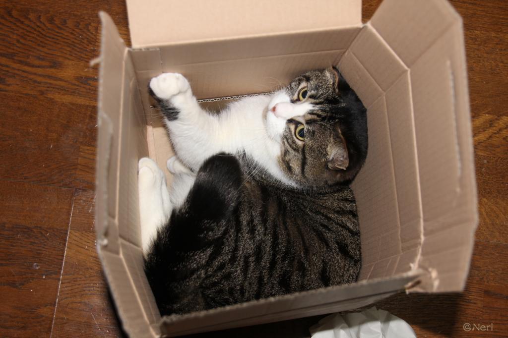【猫】付録とて侮れぬ_f0141609_223428100.jpg