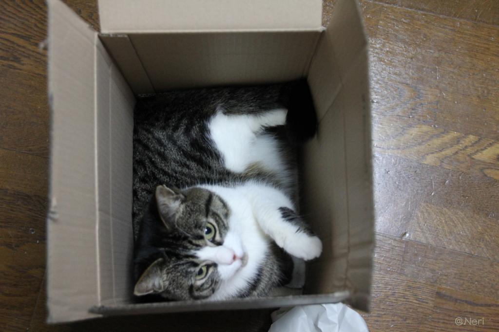 【猫】付録とて侮れぬ_f0141609_22343067.jpg