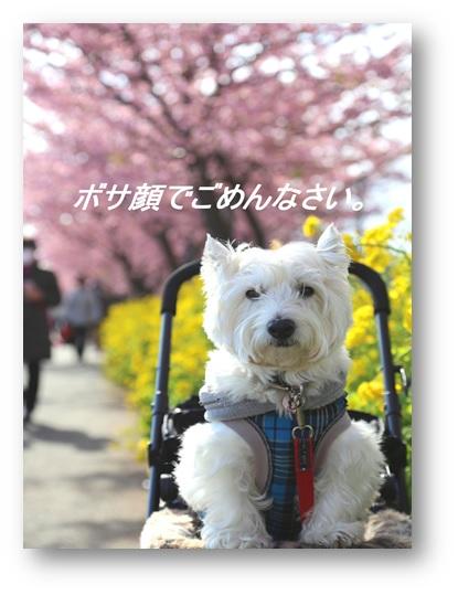 ☆河津桜と菜の花☆_a0161111_1120421.jpg