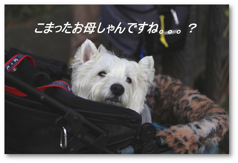 ☆河津桜と菜の花☆_a0161111_11322978.jpg