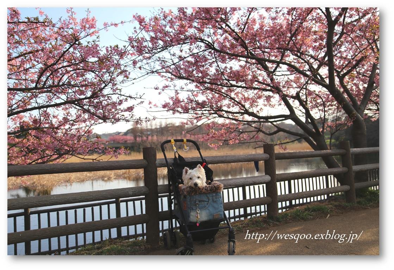 ☆河津桜と菜の花☆_a0161111_11433014.jpg