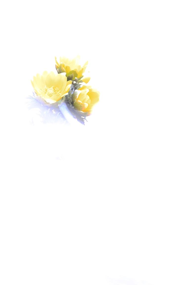 b0146723_18425154.jpg