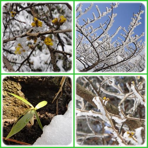 今季最後かなぁ~英彦山の霧氷_e0164643_167572.jpg