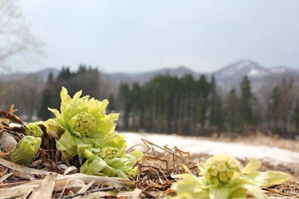 長い冬。けれど今年も春が訪れますように。。_b0199244_123368.jpg