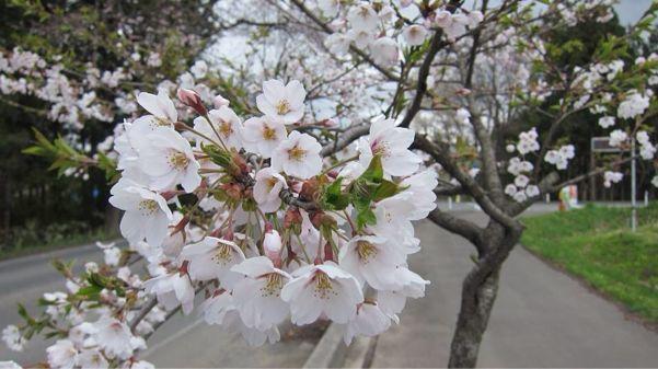 長い冬。けれど今年も春が訪れますように。。_b0199244_124051.jpg