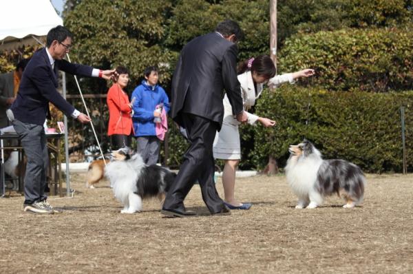 JKC Shetland sheepdog speciality show 2014_f0126965_17111652.jpg