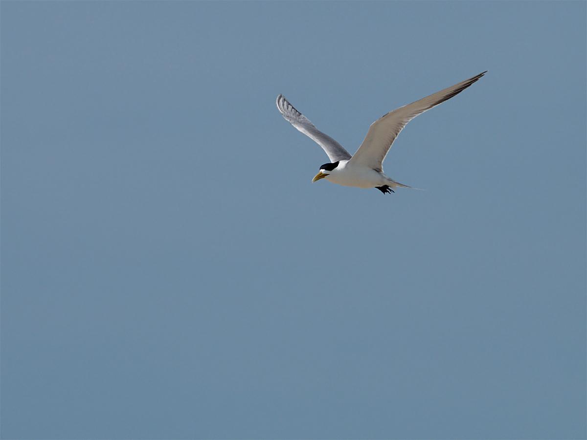 ミコマスケイで野鳥7_d0283373_19163846.jpg