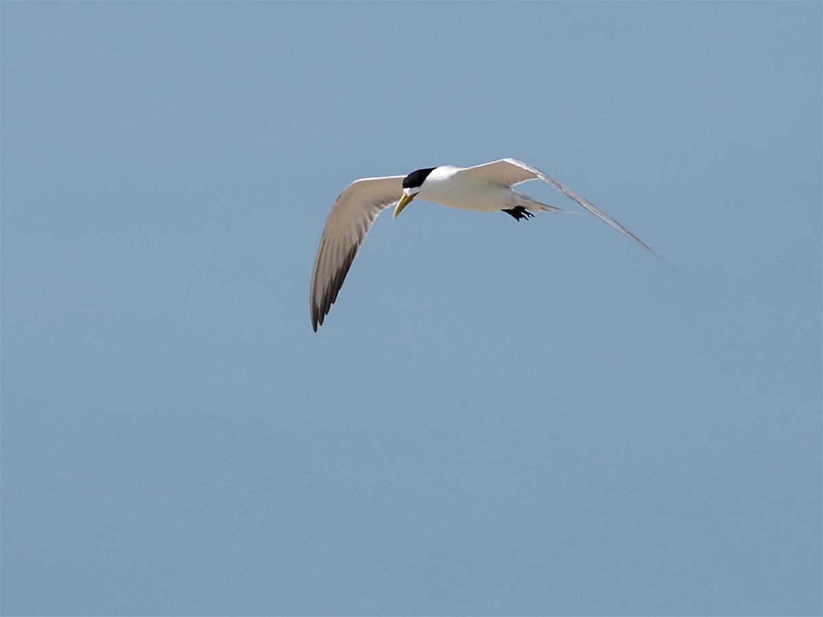 ミコマスケイで野鳥7_d0283373_19164582.jpg