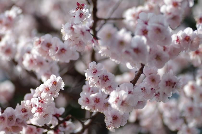 b0280900_17371189.jpg