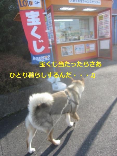 f0143123_961117.jpg