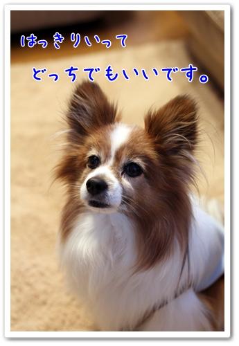 d0013149_23103480.jpg