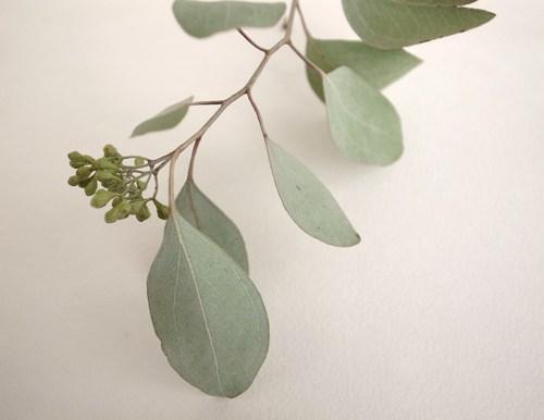 オーダー:植物モチーフのリング。_c0243355_1010614.jpg