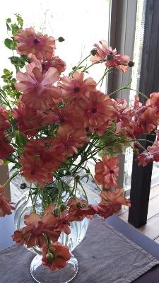 春~!_e0207360_11312153.jpg