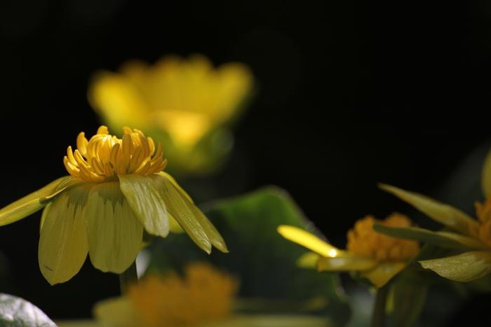 春♪_e0207782_15174033.jpg