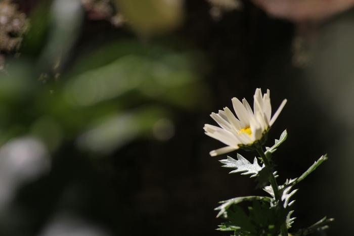 春♪_e0207782_15192498.jpg